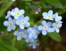 Photo de Fiction-Langage-Fleurs