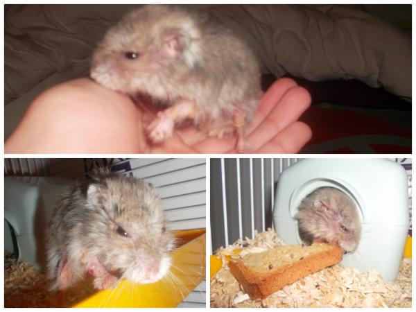 Mon hamster en rentrant des vacances