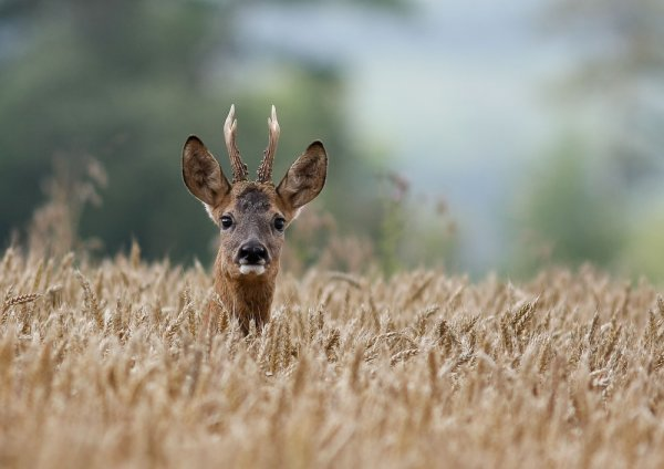 ma passion...la nature...les animaux...
