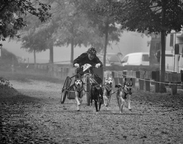 course chiens de traineaux de la Ballastière à Bischheim