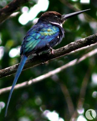 oiseau Martin 6 avril trouvé par Martine 1692430820_small