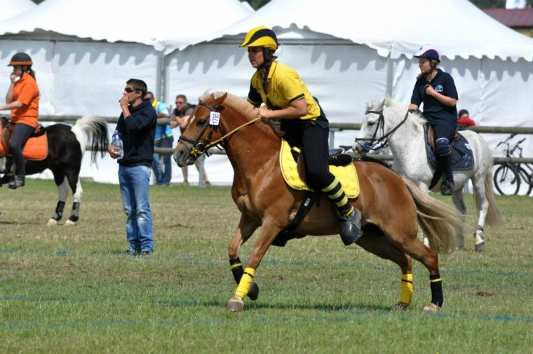Championnat de France 2012 / Pony Games Junior 1 Crazy Bees Imprévue ( photo a venir )