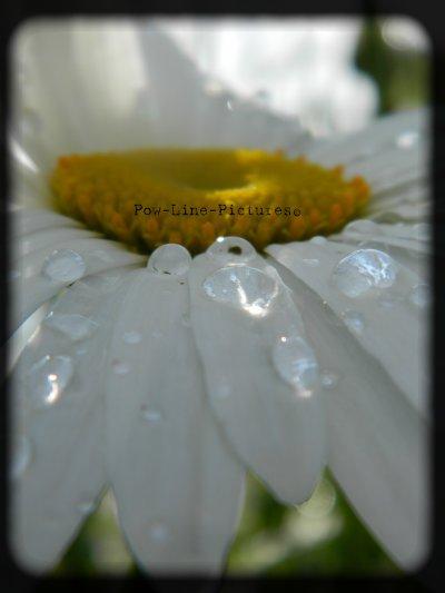 *Flowers*