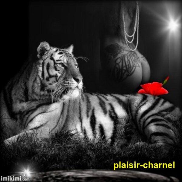 CADEAUX POUR MON AMI PLAISIR-CHARNEL