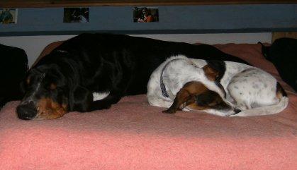 Max mon chien et élou le chien d'Aline