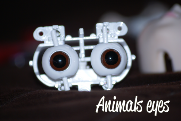 Sucre & les Animals Eyes