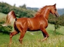 Les différentes robes de chevaux