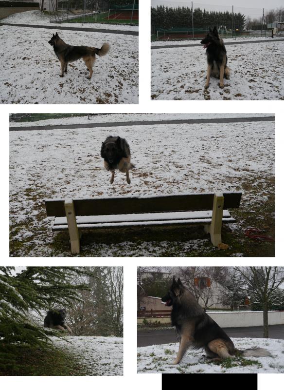 Falcon dans la neige