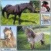 59 112  Trois chevaux - en 2015