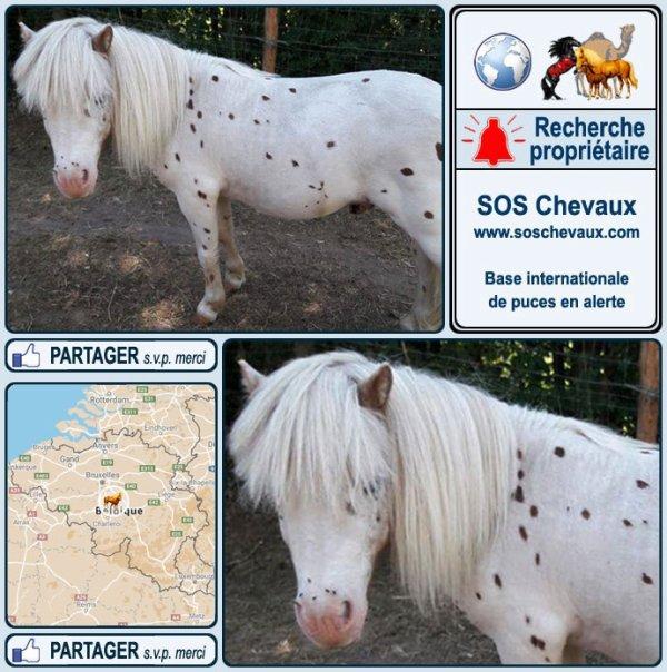 1490  poney mâle