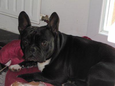 Voici mon chien !!