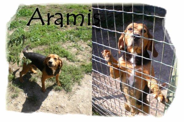 """Aramis: Croisé beagle..."""