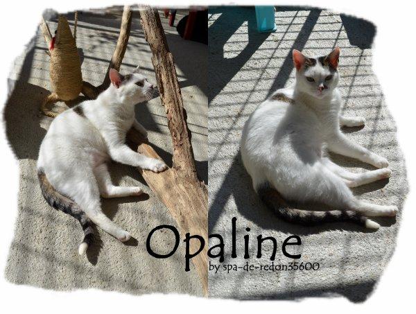 """""""Opaline: Chatte grise et blanche..."""""""