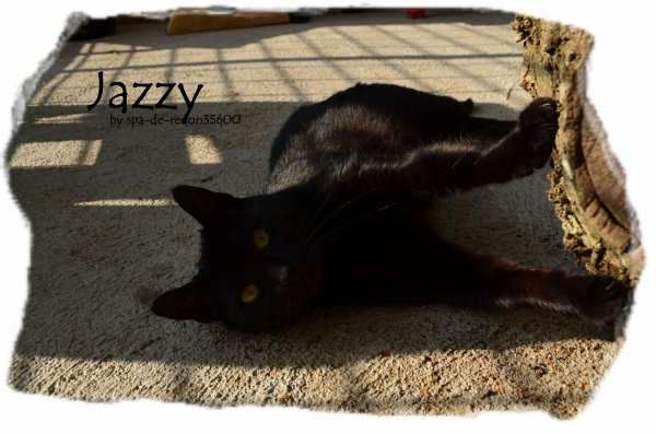 """Jazzy: Chatte noire ..."""