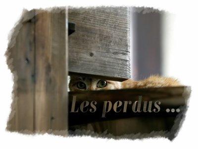 """"""" Les perdus ... """""""