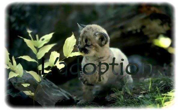 """""""Adopter un animal ... """""""