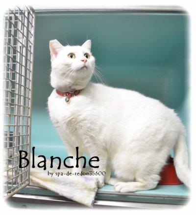 """""""Blanche: Europeenne blanche ... """""""
