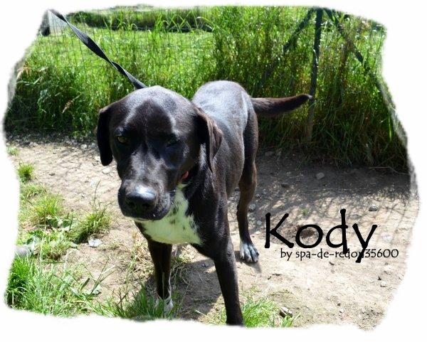 """Kody: Croise labrador noir ... """