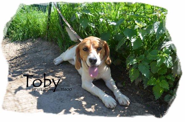 """""""Toby: Beagle ... """""""