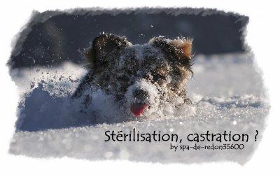 """"""" Stérilisation et castration ... """""""