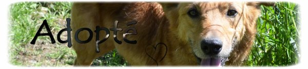 """ Hulotte: Fox terrier  ... "" ; "" Helmer: Fox terrier ... """