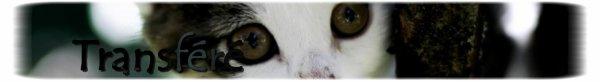 """"""" Grisou: Chat tigré gris  ... """" ; """"Blue: Chatte tricolore ... """""""