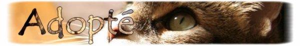 """"""" Milia: Chatte européenne marron tigrée ... """""""