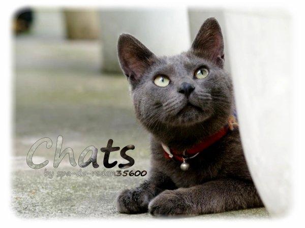 """"""" Les chats présents au refuge en ce moment .. :) """""""