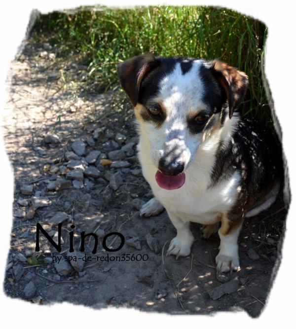 """"""" Nino: Ratier Tricolore .. """""""