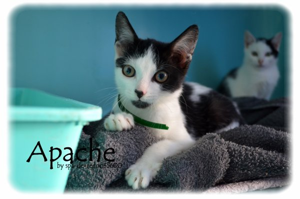 """""""Apache: Européen noir et blanc ... """""""