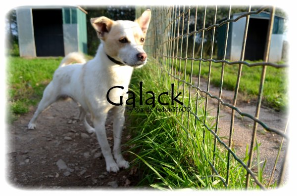 """""""Galack: Ratier roux et blanc ..."""""""