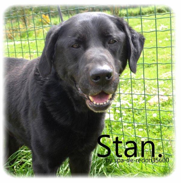 """""""Stan: Croisé labrador noir .."""""""