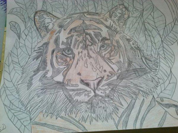 Le portrait du tigre du bengale :-)