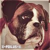 Photo de X-Poilus-X