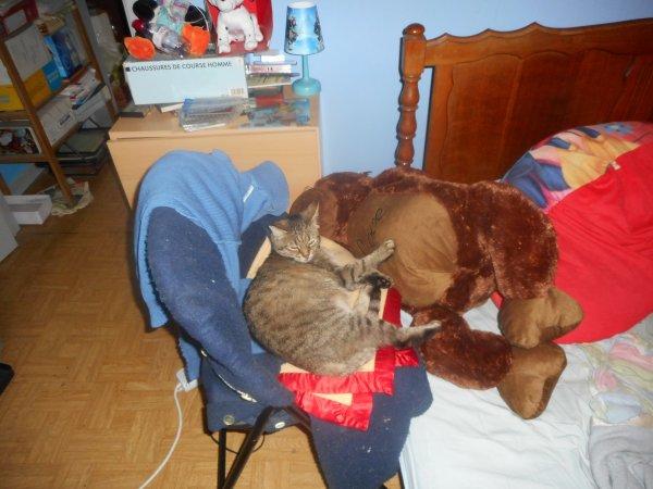Je serait absent je fait chez le vétérinaire avec grisette