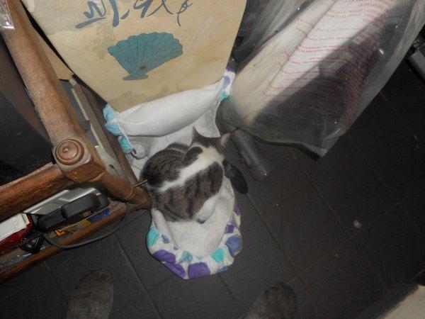 le veterinaire nous as conseiller de donner l ancien médicament de zoe pour voir si sa la calmerez pas