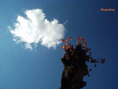 Arbre et nuage.
