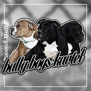 BULLY BOYS KARTEL  THE FUTURE IS NOW.....
