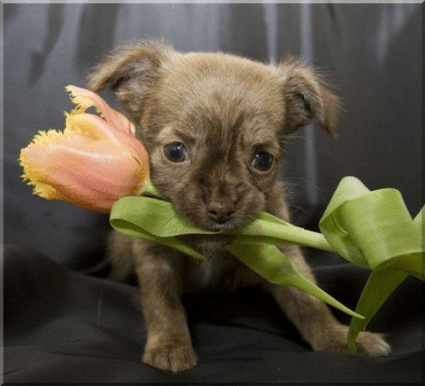 merci à mon amie du blog la rosie et Blanche628 et petitemamiedu13 et Sincerita (le petit chien) pour leurs jolis cadeaux