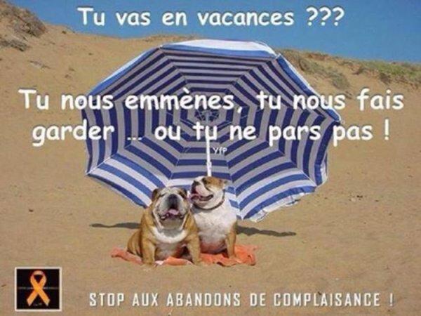 STOP AUX ABANDONS DE COMPLAISANCE ! + CADEAUX DE MES AMIS