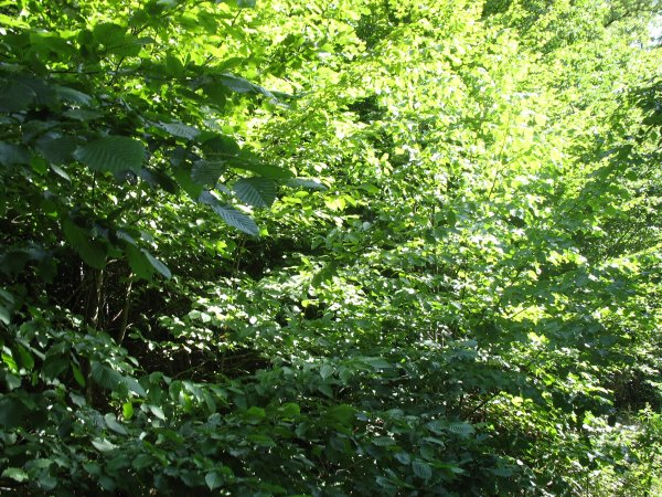 une photo de mon ecole a Hartouse+les photo a la sorti Bäenthal trop bien
