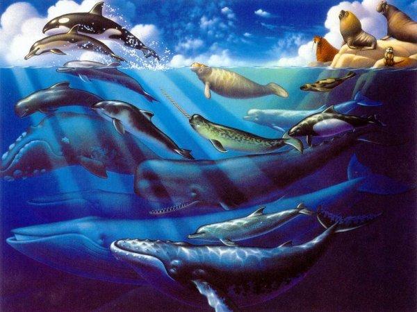 coucou  je met des belle image de baleine et de etoile de mer pour finir un cheval qui donne un coup de sabot