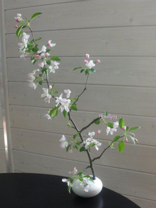 Pommier malus en fleurs