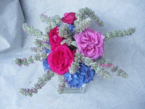 Roses et fleurs de stacchys