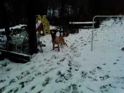 Ice dans le jardin de la ferme,et j'en profit par la même occasion pour marquer mon térritoire,avant que les autre chiens viennent le faire.