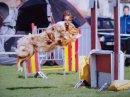 Photo de Calcio-agility