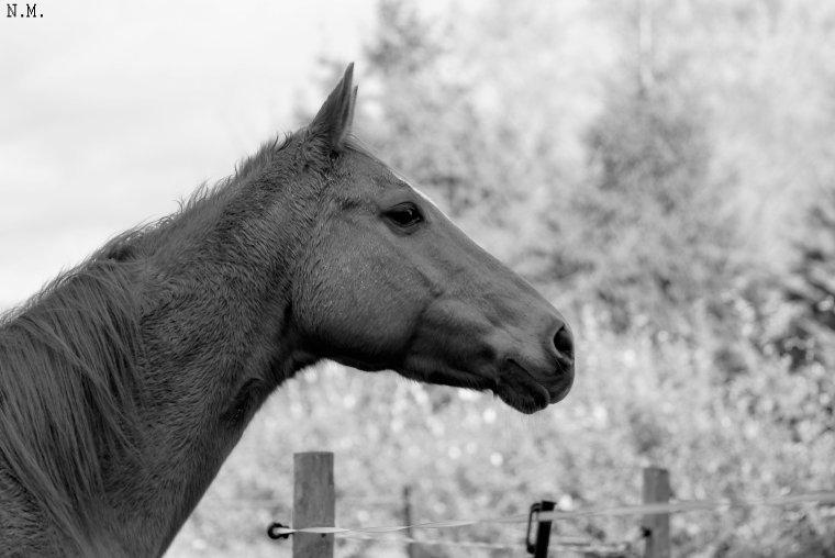 On prétend que le cheval est une animal de luxe. Il ne s'habille pourtant qu'avec des bretelles.