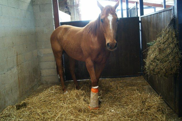 Si moi & mon cheval tombions, aidez d'abord mon cheval, s'il ne se relève pas, laissez moi.