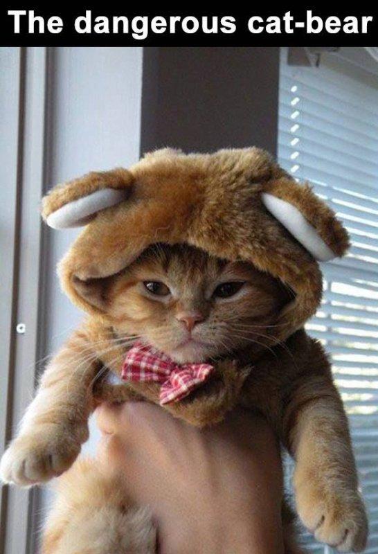 Le dangereux chat-ours !