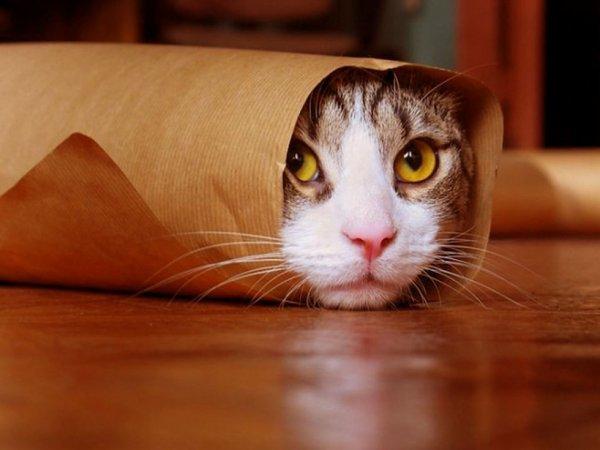 Subway lance le Cat Sandwich !